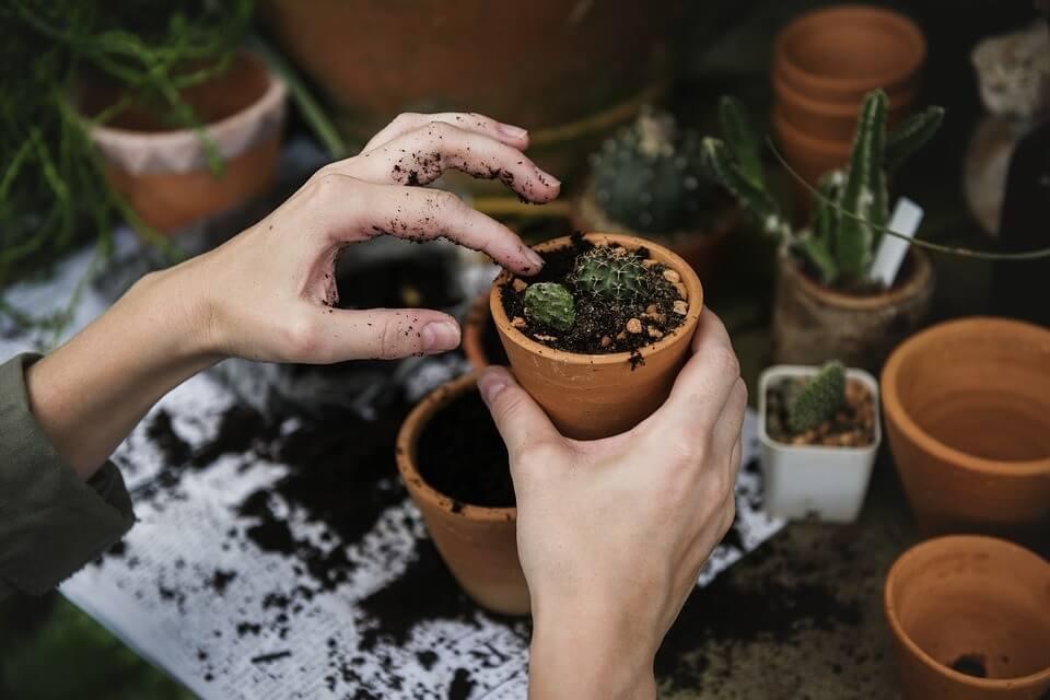 Tierra ideal para cactus
