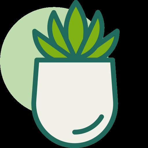 Plantas Crasas y Suculentas